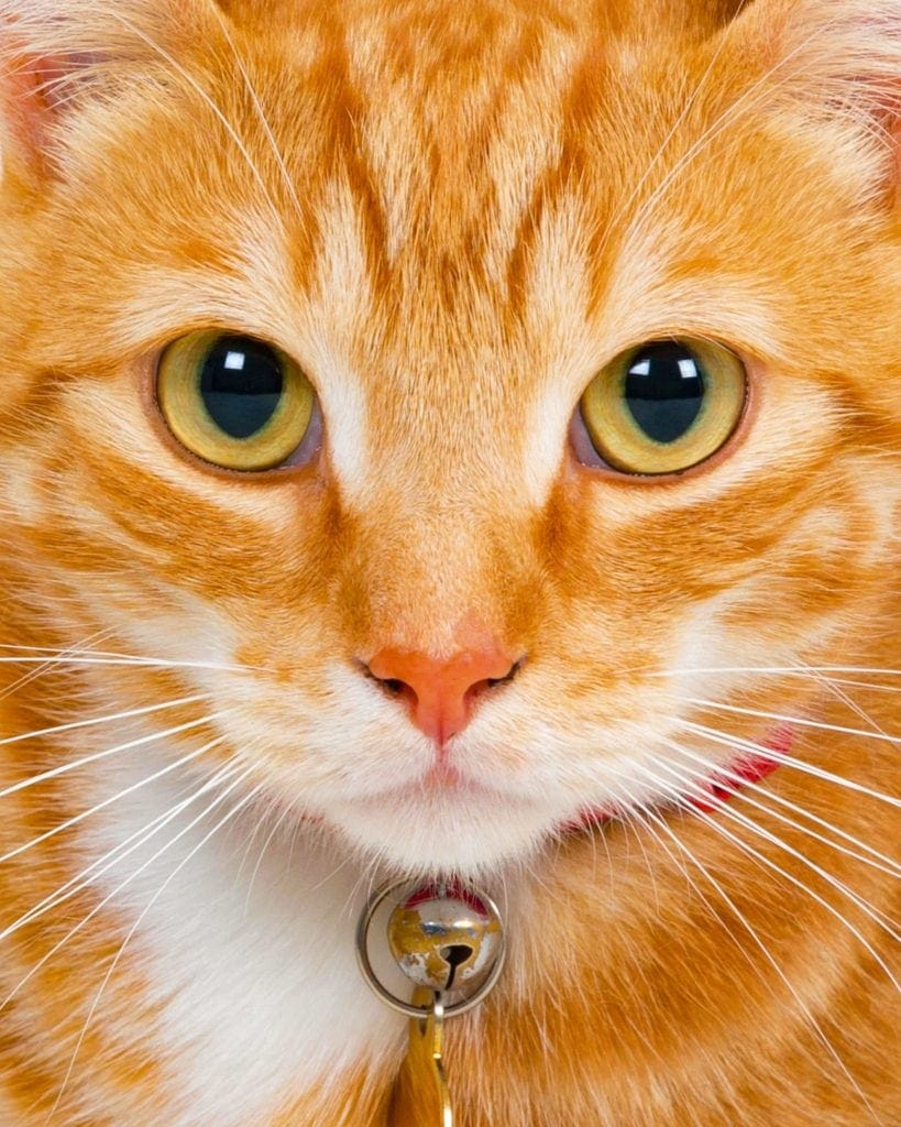 tabby cat close up by Sarah Offley