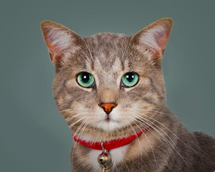 green eyed cat portrait photograph