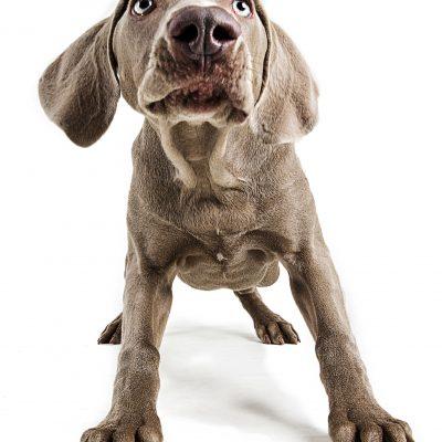 Puppy Photoshoot