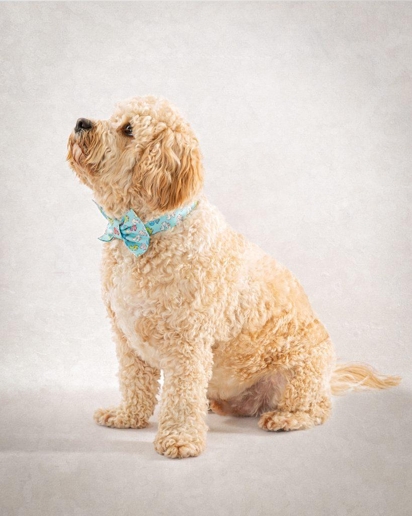 Fine art portrait of dog