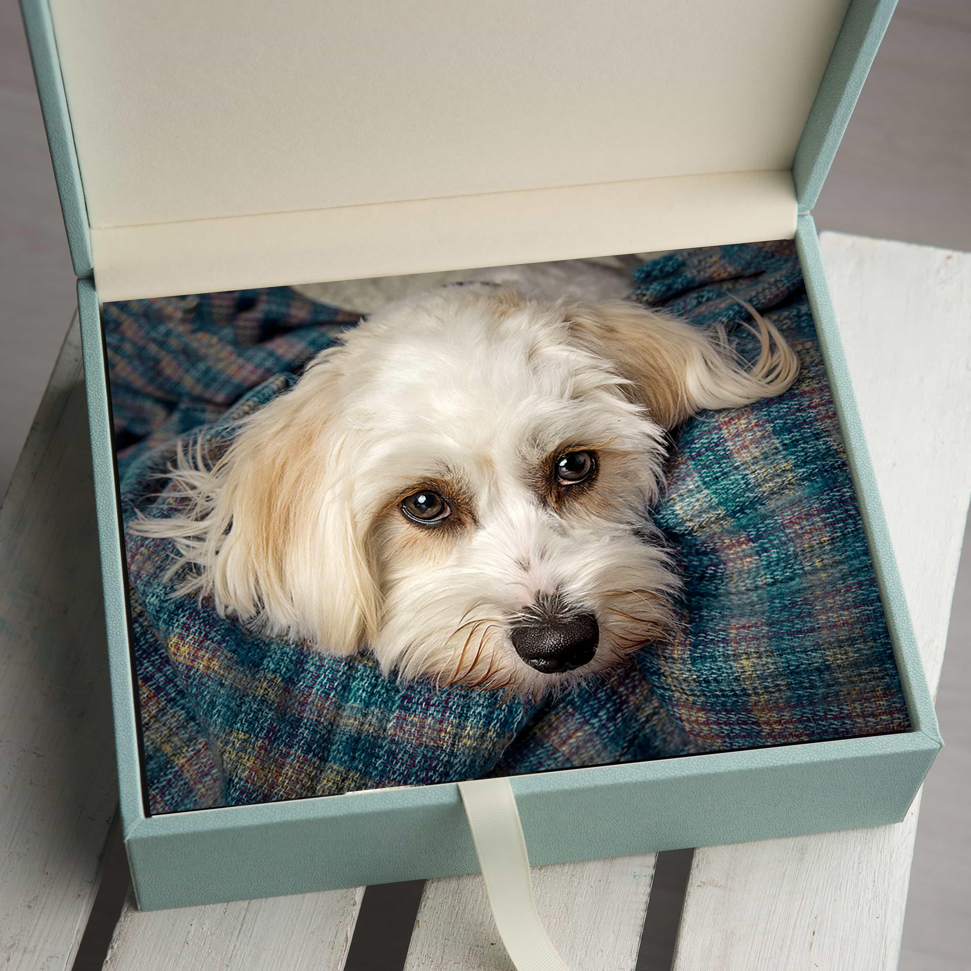 folio box for pet portraits offley photography