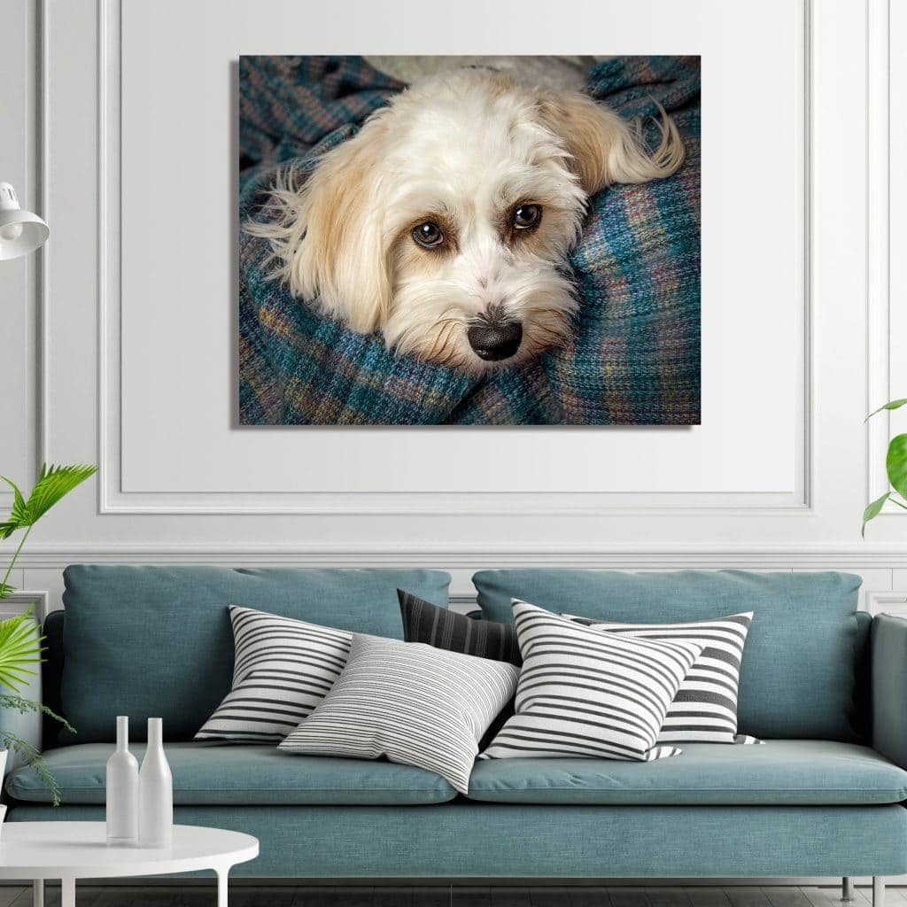 square metallic wall art for dogs portrait session offley photography wirral
