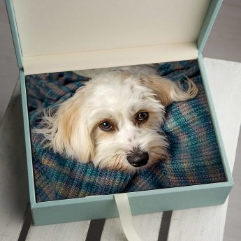 folio box for pet portraits offley photography